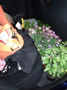 Flowers in my car